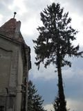 una porción de una torre del castillo al lado de un árbol viejo gigante fotografía de archivo libre de regalías