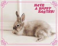 Una postal que representa un conejo y los deseos de un día de fiesta feliz de Pascua foto de archivo