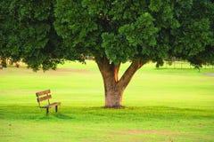 Una presidenza di legno sotto l'albero in un giardino Immagine Stock
