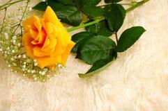 Una priorità bassa gialla della seta dell'annata e della rosa Fotografia Stock Libera da Diritti