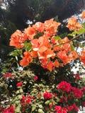 Una profusión de flores del jardín fotos de archivo