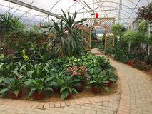 Una progettazione piacevole del giardino nella città di Nanning del parco del fiore Fotografie Stock