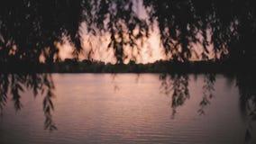 Una puesta del sol meridional hermosa, orilla del río con los árboles metrajes