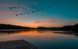 Una puesta del sol tranquila reservada en el lago en la multitud del vuelo del cielo de pájaros imagen de archivo
