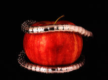 Una pulsera de plata en una manzana roja Fotos de archivo