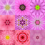 Una raccolta di un caleidoscopio concentrico rosa di nove mandale del fiore Fotografie Stock