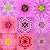 Una raccolta di un caleidoscopio concentrico rosa di nove mandale del fiore Immagini Stock