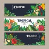Una raccolta di vettore di tre carte, con i pappagalli, i fiori esotici, le piante e le foglie illustrazione vettoriale