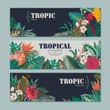 Una raccolta di vettore di tre carte, con i pappagalli, i fiori esotici, le piante e le foglie illustrazione di stock