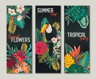 Una raccolta di vettore di tre carte, con il tucano, i fiori esotici, le piante e le foglie illustrazione vettoriale