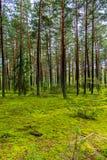 Una radura verde in un'alta abetaia contro il cielo blu posto di resto, del picnic e del viaggio Immagine Stock Libera da Diritti