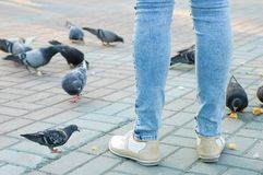 Una ragazza alimenta i piccioni con le briciole di pane immagini stock