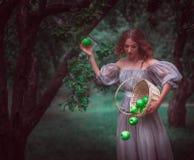 Una ragazza con un canestro con le mele in una foresta leggiadramente immagini stock