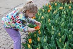 Una ragazza e tulipani Immagine Stock