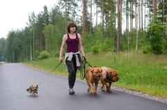 Una ragazza ed i suoi cani che camminano in una foresta di estate fotografia stock libera da diritti