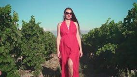 Una ragazza incinta in un vestito rosso sta camminando attraverso la vigna Una ragazza incinta con capelli lunghi in vetri archivi video