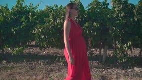 Una ragazza incinta in un vestito rosso sta camminando attraverso la vigna Una ragazza incinta con capelli lunghi in vetri video d archivio