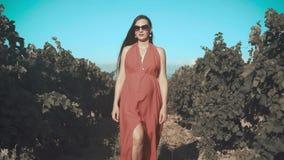 Una ragazza incinta in un vestito rosso sta camminando attraverso la vigna Una ragazza incinta con capelli lunghi in vetri stock footage