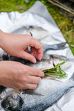 Una ragazza mette i rosmarini in un dorado del pesce Fotografia Stock