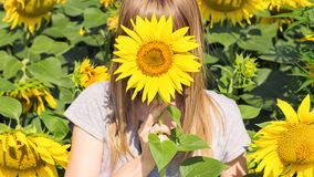 Una ragazza si nasconde dietro un girasole fotografie stock libere da diritti