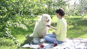 Una ragazza sta alimentando il suo cane in un parco su un picnic stock footage