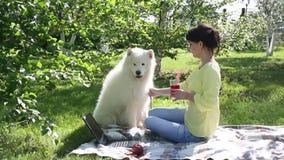 Una ragazza sta alimentando il suo cane in un parco su un picnic archivi video