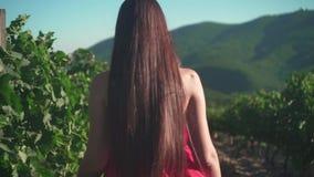 Una ragazza in un vestito rosso sta camminando attraverso la vigna Una ragazza libera con le passeggiate lunghe dei capelli attra stock footage