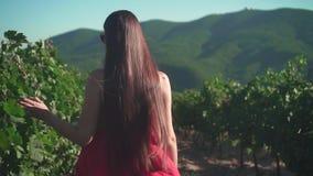 Una ragazza in un vestito rosso sta camminando attraverso la vigna Una ragazza libera con le passeggiate lunghe dei capelli attra video d archivio