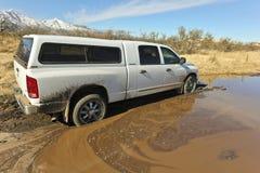 Una ram di espediente ha attaccato nel fango Immagine Stock Libera da Diritti