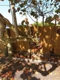 Una rama con una cerca alrededor de ella Fotos de archivo
