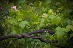 Una rama de árbol Foto de archivo libre de regalías