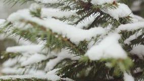Una rama de árbol nevada de abeto, nieve helada cae en el bosque almacen de metraje de vídeo