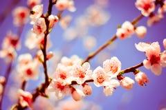 Una rama de flores coloridas, con el fondo del cielo azul fotos de archivo