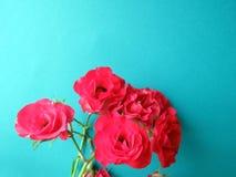 Una rama de la rosa roja Imágenes de archivo libres de regalías