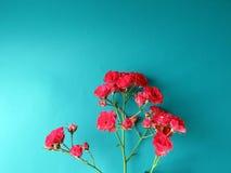 Una rama de la rosa roja Fotos de archivo