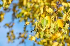 Una rama de un árbol con las hojas de otoño coloridas contra un cielo azul en un fondo fotos de archivo