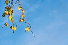 Una rama de un árbol con las hojas de otoño coloridas contra un cielo azul en un fondo fotos de archivo libres de regalías