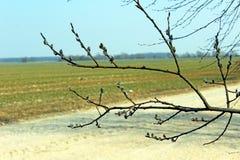 Una rama del camino Foto de archivo libre de regalías