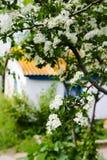Una rama del espino con las flores blancas Primavera, pueblo fotos de archivo