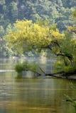 Una rama que toma una inmersión Imagen de archivo libre de regalías