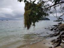 Una rama sobre el mar Foto de archivo