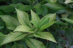 Una rama verde de una planta de jardín Imagenes de archivo