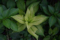 Una rama verde de una planta de jardín Foto de archivo libre de regalías