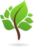 Una ramificación con verde sale - de insignia/del icono de la naturaleza Foto de archivo libre de regalías