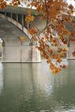 Una ramificación de oro del otoño cerca de un puente Fotos de archivo libres de regalías