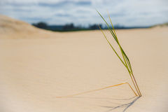 Una ramita sola y sola en una duna de arena imágenes de archivo libres de regalías