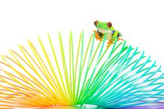 Una rana de árbol eyed roja en un juguete colorido imágenes de archivo libres de regalías