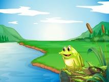 Una rana en el riverbank Imagen de archivo libre de regalías