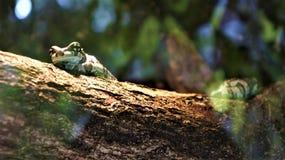 Una rana extraña en un tronco imagen de archivo