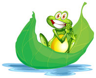 Una rana sonriente en la hoja grande Fotos de archivo libres de regalías